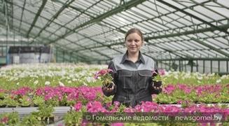 """В Гомеле рабочие предприятия """"Красная гвоздика"""" высадят до 400 тысяч цветов"""